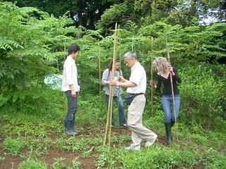 Community Garden Lemon Begins 066